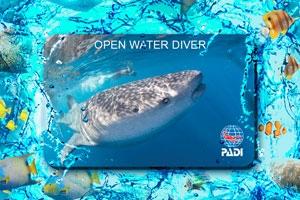 Beginner Open Water