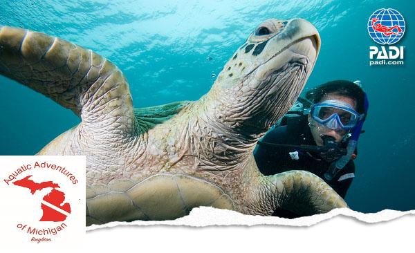 SCUBA-Turtle Shot